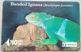 19FJD Banded Iguana $10 - Fiji