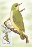 """S. Tomè E Principe 1983 Sc. 736 Birds FDC Zosterops Ficedulinus """" Occhio Bianco """"  Passeri Maximum Card Maxi - Sparrows"""