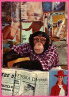 Cp Dentelée - Monkey - Singe Posant Avec Magazine - Livre - Journal - KRUGER - 1968 - Monos