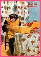 Monkey - Singe Faisant La Vaisselle - Bassine - 1979 - Gebr. SPANJERSBERG - Monos