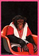 Cp Dentelée - Monkey - Singe Assis Dans Un Fauteuil Rouge - KRUGER - Monos