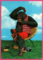 Monkey - Photographe - Singe Faisant De La Photographie - 1984 - KRUGER - Monos