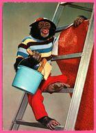 Monkey - Singe Tapissier Sur Une échelle - KRUGER - Monos