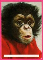 Monkey - Bébé Singe - Portrait - 1982 - Monos