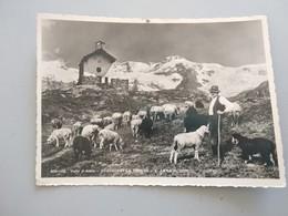 CARTOLINA GRESSONEY LA TRINITÈ - S. ANNA - Aosta
