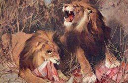 [DC7505] CPA - LEONI - PRANZO NEL DESERTO - TADE STYKA - Old Postcard - Lions