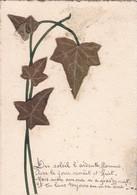 JOLIE CARTE / COLLAGE LIERRE ET POEME - Plantes Médicinales