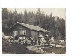 20618 - Refuge De La Givrine  Vaches+ Cachet Du Refuge (format 10X15) Attention Pli Coin Supérieur - VD Vaud