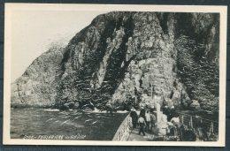 Norway Spitsbergen RP Postcard. Fuglebjerg Nordkap,Bird Cliffs, Ship - Norway