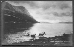 1928 Norway Tromso Reindeer Postcard. Nordlands Posteksp. - Baltimore USA. Ibsen 20 Ore - Norway