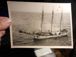 7d) FOTOGRAFIA NAVE DA CARICO TRE ALBERI A VELA GOLETTA SENZA DATA - Boats