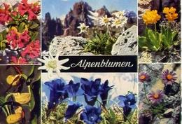 Alpenbumer - Formato Grande Viaggiata Mancante Di Affrancatura – E 7 - Cartoline