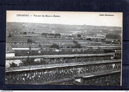 77 - Thomery - Les Murs à Raisin - Autres Communes