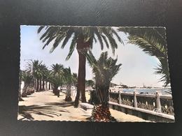 37 - BIZERTE La Promenade De La Plage - - Maroc