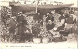 Dépt 35 - CANCALE - Triage Des Huîtres (travail Femmes) - LL N° 53 -  Édition Legros - Cancale
