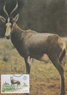Portugal 1984 Maxicard Scott #1587 16e Damalisco Albifronte, Lisbon Zoo 100th Anniversary - Cartes-maximum (CM)