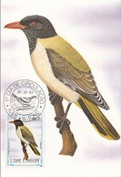 "741 S. Tomè E Principe 1983 Birds FDC Oriolus Crassirostris "" Rigogolo Oriolo ""  Passeri Maximum Card Maxi - Sparrows"