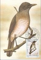 "740 S. Tomè E Principe 1983 Birds FDC Turdus Olivaceofuscus "" Tordo Mughetto ""  Passeri Maximum Card Maxi - Sparrows"
