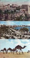 Libia, Tripoli + Cammelli, 3 Cartoline  Fine Anni '50 - Libia