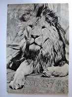 ANIMAUX - Lion - 1956 - Leoni