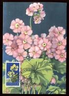 Saint Marin - Carte Maximum 1957 - Fleurs - O 205 - Saint-Marin