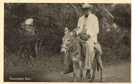 Curacao, Koenoekoe Kunuku Farmer On Donkey (1950s) Postcard - Curaçao