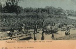 Suriname, PARAMARIBO, Native Maroons With Raft (1899) Postcard - Surinam