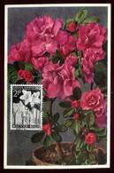 Belgique - Carte Maximum 1955 - Fleur - O 259 - Maximum Cards
