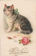 Chats : Chaton : Bonne Année - Cats