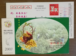 Fruit Picking,China 2003 Suichuan Kumquat Royal Tribute Since Song Dynasty Advertising Pre-stamped Card - Fruits