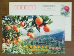 Hometown Of Sweet Citrus,China 2001 Xunwu The Expert Base County Of Navel Orange Advertising Pre-stamped Card - Frutas