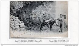 63 - SAINT PIERRE ROCHE - Reyvialle (Attelage) - Autres Communes