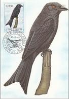 "742 S. Tomè E Principe 1983 Birds FDC Dicrurus Modestus "" Drongo Modesto ""  Passeri Maximum Card Maxi - Sparrows"