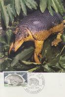 Carte  Maximum  1er  Jour   FRANCE   Tatou  Géant  De  La  Guyane   CAYENNE    1974 - Cartes-Maximum