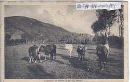 BIVIGLIANO (2) - Italia