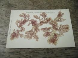 Carte Postale Ancienne Algues Marines Naturelles (Belle Ile En Mer, Petitjean) - Belle Ile En Mer