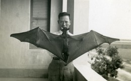 Vietnam Saigon Homme Asiatique Et Chauve Souris Old Photo 1935 - Personnes Anonymes