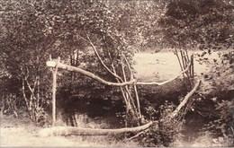 Vallée De L'HERMETON - Pont Rustique Sur Le Ruisseau - Edition : Aug. Dumont, Photog., Hastière - Hastière