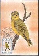 "733 S. Tomè E Principe 1983 Birds FDC Serinus Mozambicus Santhome "" Canarino ""  Endemico Maximum Card Maxi - Sparrows"