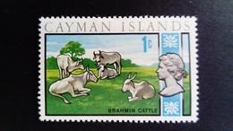 Iles Caïmans Cayman Islands 1970 Animal Boeuf Buffalo Yvert 265 ** MNH - Iles Caïmans