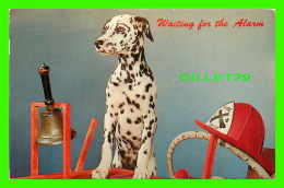 CHIENS, DOGS - DALMACIEN WAITING FOR THE ALARM - TRAVEL IN 1962 -  DEXTER PRESS - - Chiens