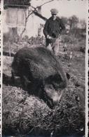 PHOTO 6,3 X 9,7 Cm Souvenir D'Adam Louis Facteur à Colombey Les Deux Eglises Sanglier Javote à 2 Ans Le 4 Mars 1935 - Colombey Les Deux Eglises