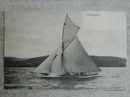 """"""" PTARMIGAN """"  Bateau Voilier Carte Envoyée En 1903 - Ecosse"""