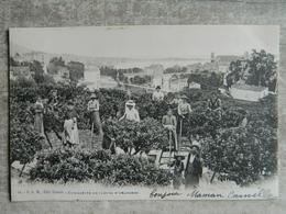 CUEILLETTE DE FLEURS D' ORANGERS - Francia