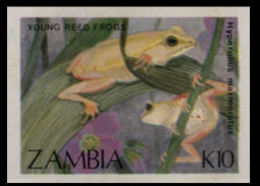 ZAMBIA 1989 Young Reed Frog K10 IMPERF - Zambia (1965-...)