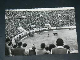TOULOUSE   1960  /   VUE CORRIDA ARENES DU SOLEIL    ... EDITEUR - Toulouse
