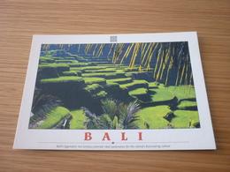 Rice Terraces Indonesia Bali Postcard Carte Postale - Cartes Postales