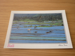 Balinese Farmer Indonesia Bali Postcard Carte Postale - Postcards