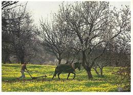 Entier Postaux De Tourisme - Lagos - Landscape With Almond Trees - (Algarve) - Portugal - Postal Stationery