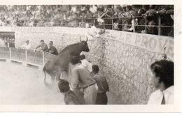 13 MOURIES TAUREAUX TAUREAU CAMARGUE ARENES CANTO BEAUCAIRE PHOTO GEORGE - Autres Communes